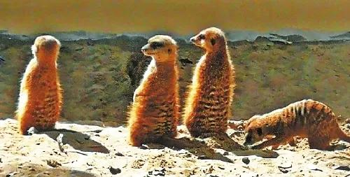 位于晋安的福州动物园新引进7种动物 新春迎客
